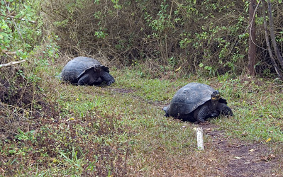 A pair of Tortoises blocking the path   (Dec 09, 2005, 10:41am)
