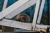 Sea Lion on ramp