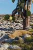 Sea Lion and Cactus