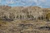 Grove of Trees on Española Island
