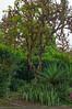 Plantings at Royal Palm Hotel