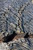Line of Bubbles in Lava Flow