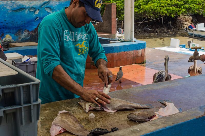 Puerto Ayora Fisk Market
