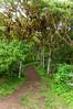 Path in Santa Cruz Highlands