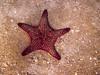 Panamic Cushion Star