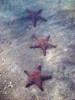 Three Panamic Cushion Stars