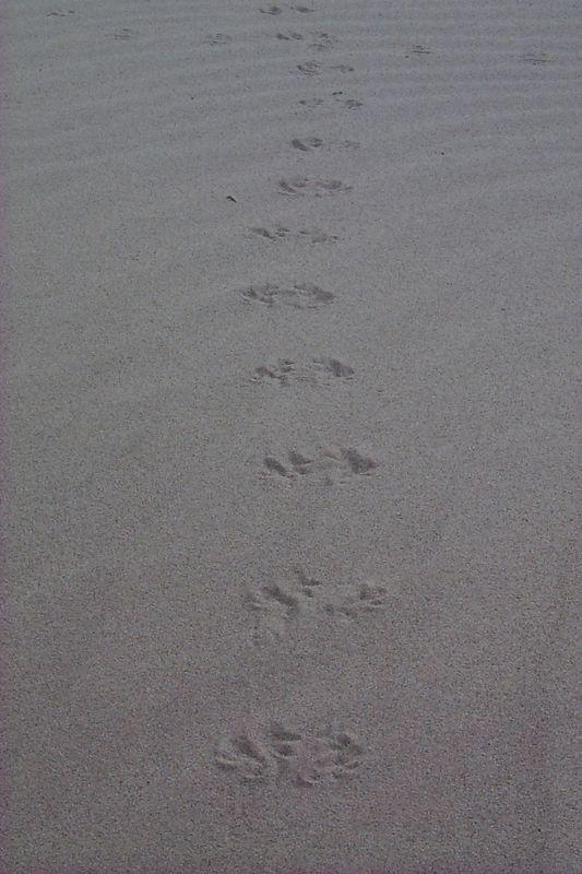<b>Pattern of Tracks in Sand</b>   (Jun 01, 1999, 07:52am)