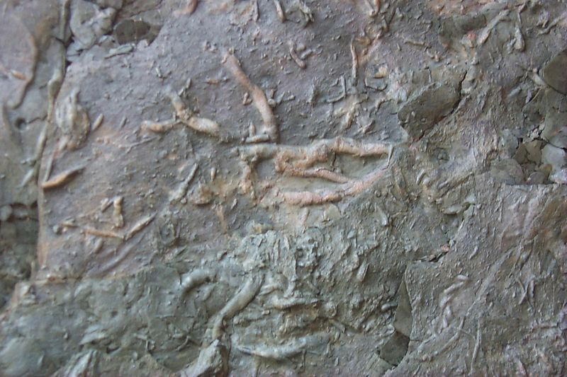 <b>Worm Track Fossils</b>   (Jun 10, 1999, 11:20am)