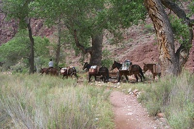 Mule Train   (Jun 02, 1999, 10:50am)