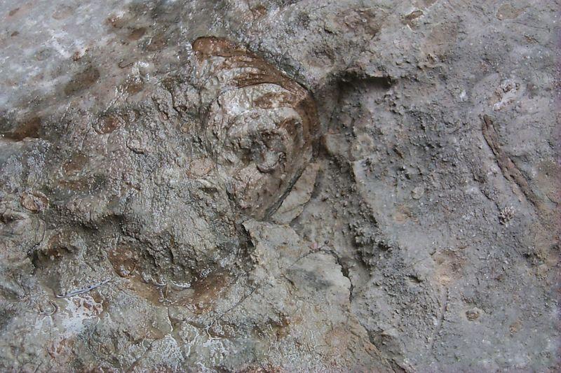 <b>Fossil</b>   (Jun 04, 1999, 02:09pm)