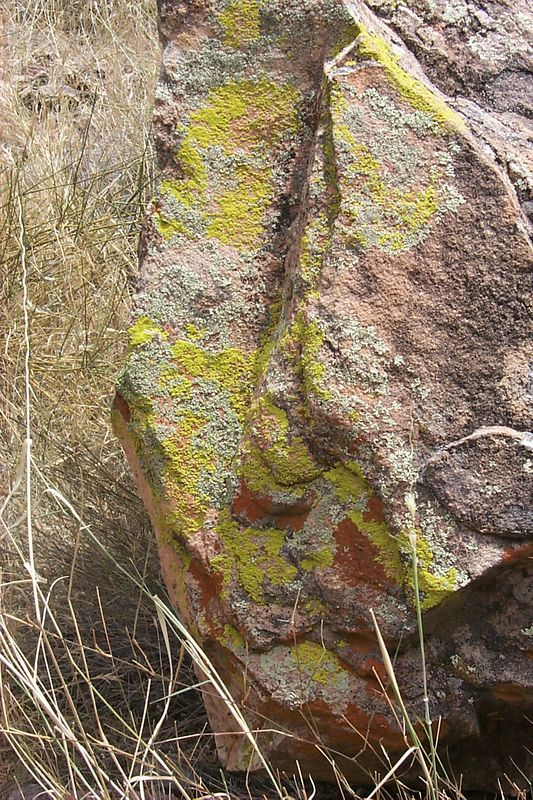 <b>Lichen on Rock</b>   (Jun 05, 1999, 02:36pm)