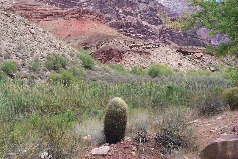 <b>Barrel Cactus</b>   (Jun 05, 1999, 01:18pm)