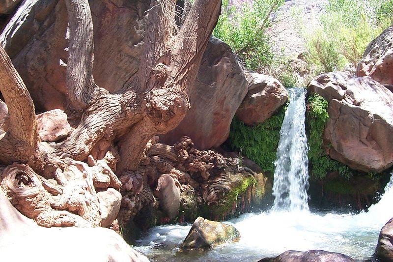 <b>Waterfall Tree Root</b>   (Jun 06, 1999, 12:34pm)