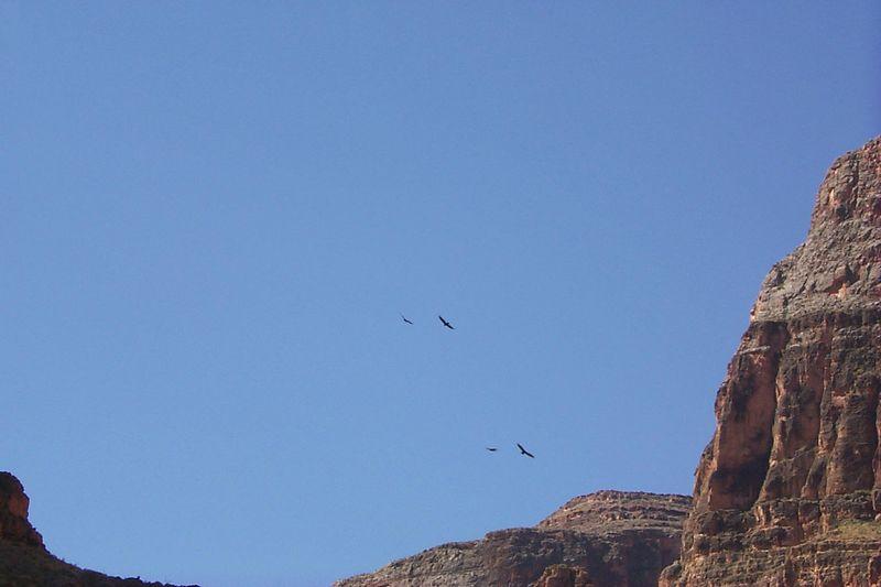 <b>Turkey Vultures</b>   (Jun 07, 1999, 10:07am)
