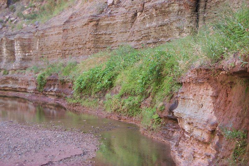 <b>Ferns along Wall</b>   (Jun 07, 1999, 11:44am)