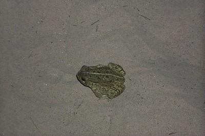 Toad   (Jun 09, 1999, 09:28pm)