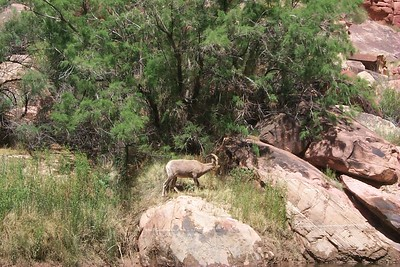 Bighorn   (May 27, 1999, 11:25am)