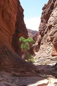 North Canyon View   (May 27, 1999, 12:28pm)