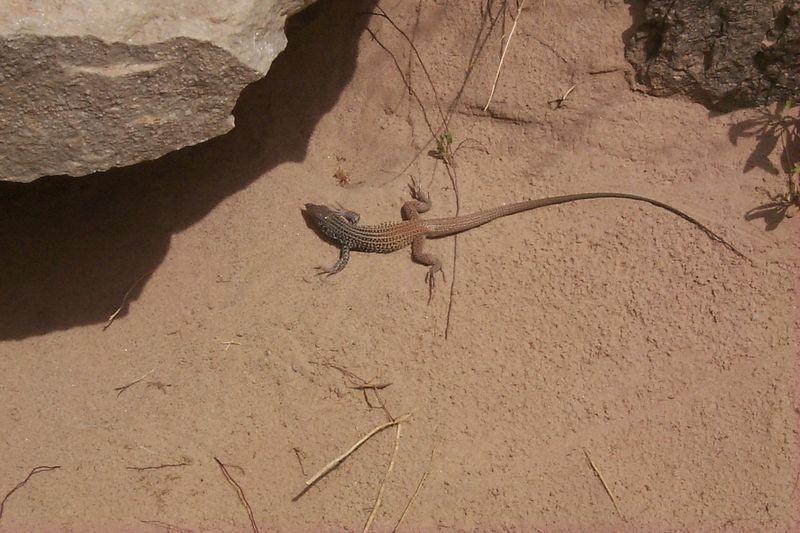 <b>Lizard</b>   (May 28, 1999, 12:14pm)