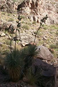 Yucca   (May 28, 1999, 08:44am)