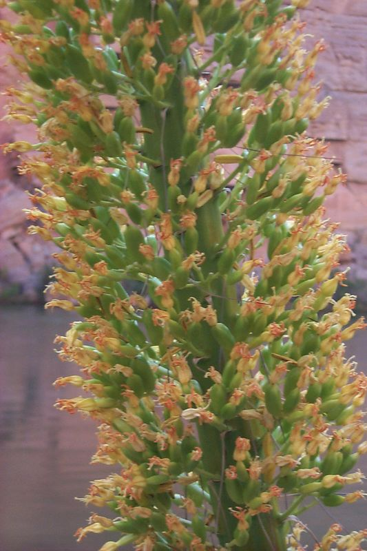 <b>Century Blooms</b>   (May 29, 1999, 09:00am)