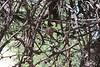 <b>Hummingbird Nest</b>   (May 30, 1999, 04:48pm)