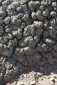 Pattern of Mud   (May 30, 1999, 05:01pm)