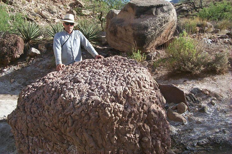 <b>Rock Fossilized Algae</b>   (May 30, 1999, 05:50pm)