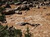 <b>Looking down on Upper Disaster Falls</b>   (Jun 26, 2003, 04:36pm)