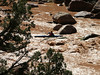 <b>Bill runs Upper Disaster Falls</b>   (Jun 26, 2003, 04:37pm)