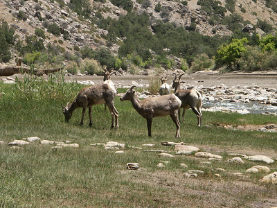 Sneaking up on the bighorn sheep   (Jun 28, 2003, 12:51pm)