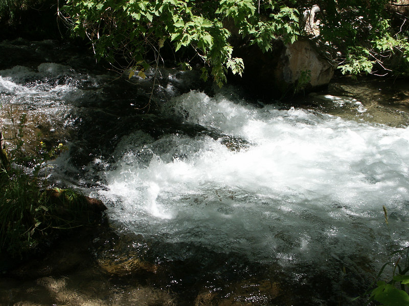 <b>Stream in Jones Hole canyon</b>   (Jun 28, 2003, 01:53pm)