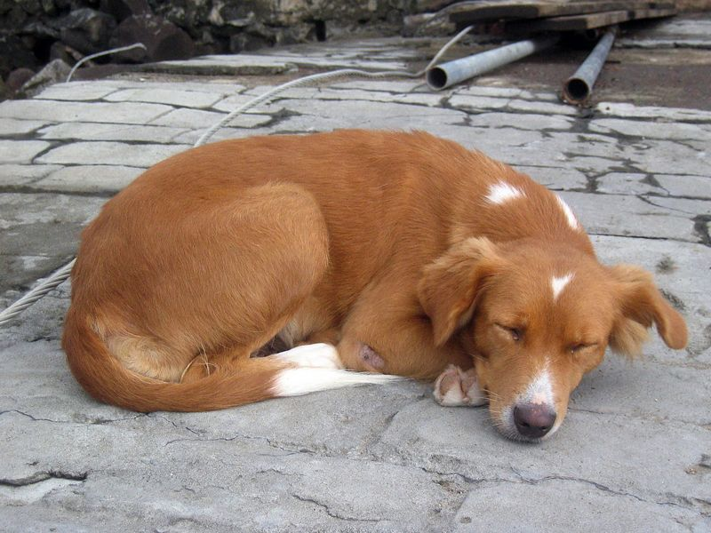 <b>Resident dog of Wallilabou Bay</b>   (Jul 15, 2004, 11:24am)