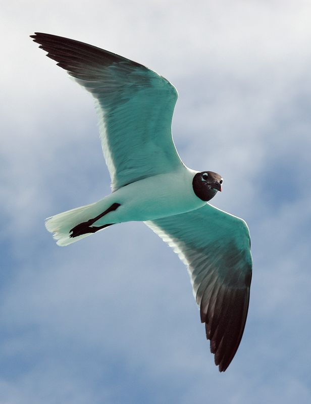 <b>Seagull in flight</b>   (Jul 22, 2004, 08:54am)