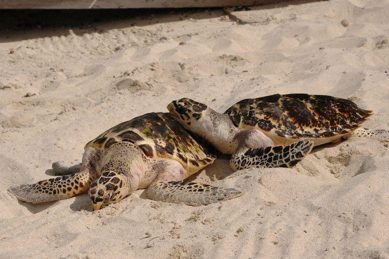 <b>Turtle sibling love</b>   (Jul 25, 2004, 03:01pm)