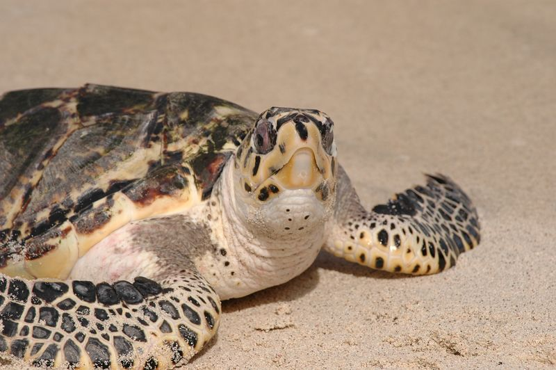 <b>Close up of a turtle's face</b>   (Jul 25, 2004, 03:05pm)