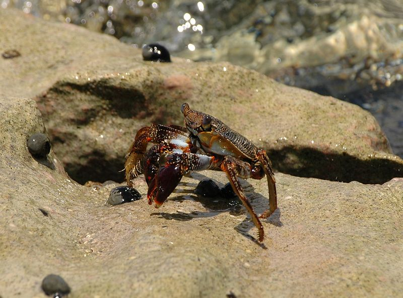 <b>Close up of a crab on the reef</b>   (Jul 25, 2004, 12:33pm)