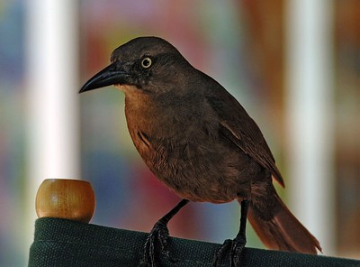 This bird showed a strong interest in our lunch   (Jul 25, 2004, 12:58pm)