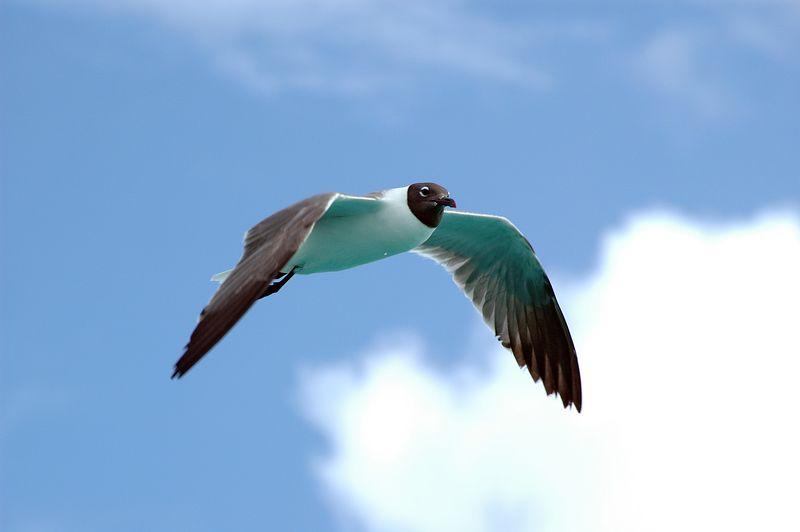<b>Seagull in flight</b>   (Jul 22, 2004, 08:58am)