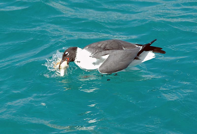 <b>Seagull eats a piece of bread</b>   (Jul 21, 2004, 09:12am)