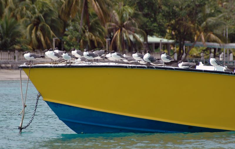 <b>Seagulls resting on the bow of a boat</b>   (Jul 19, 2004, 10:20am)