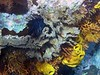 <b>Coral wall of New Guinea Reef</b>   (Jul 16, 2004, 02:56pm)
