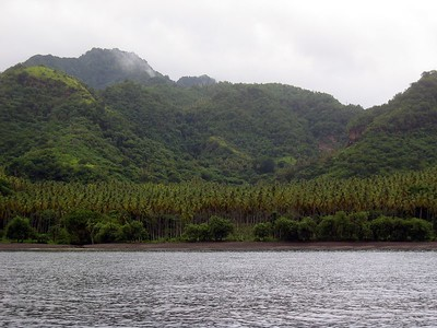 Palm trees on the coast of St. Vincent   (Jul 15, 2004, 10:54am)