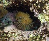 <b>Feather duster worm</b>   (Jul 16, 2004, 02:48pm)