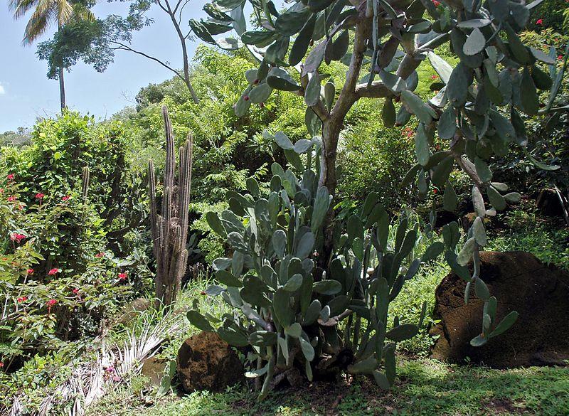 <b>Cactus in the rain forest</b>   (Jul 16, 2004, 11:41am)