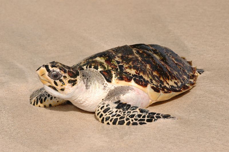 <b>This turtle gives me an inquisitive look</b>   (Jul 25, 2004, 03:05pm)