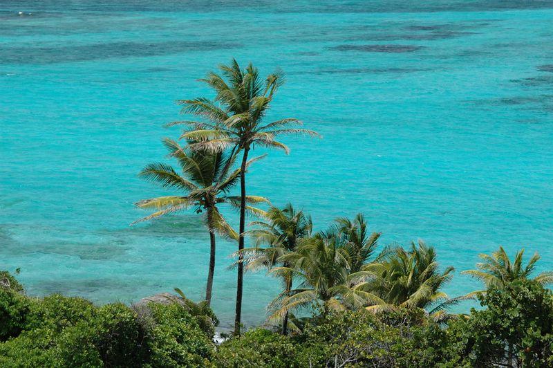 <b>Palm trees near the Atlantic Ocean</b>   (Jul 26, 2004, 01:34pm)