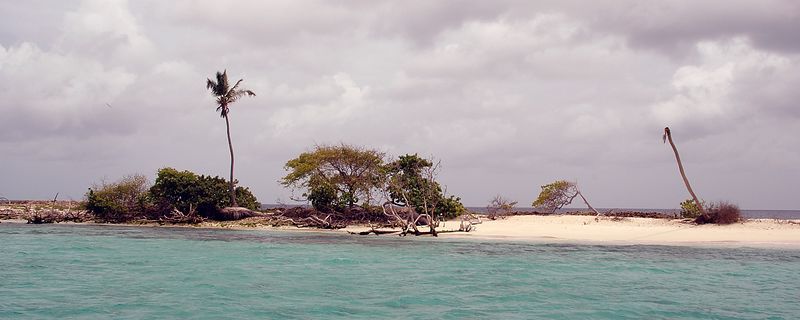 <b>What's left of the vegetation on Sandy Island</b>   (Jul 20, 2004, 11:05am)  <p align=left>Sandy Island is a small strip of sand just north of Carriacou.  I was told that Sandy Island used to be covered with palm trees but a recent hurricane wiped out most of its vegetation.  All that's left is one sick looking palm tree and some scrub brush.</p>  <p align=left></p>