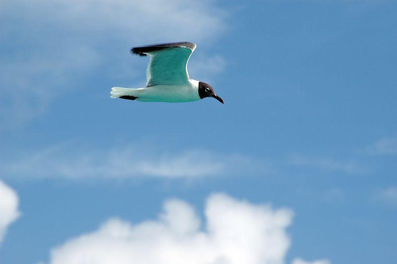 <b>Air seagull</b>   (Jul 22, 2004, 08:56am)