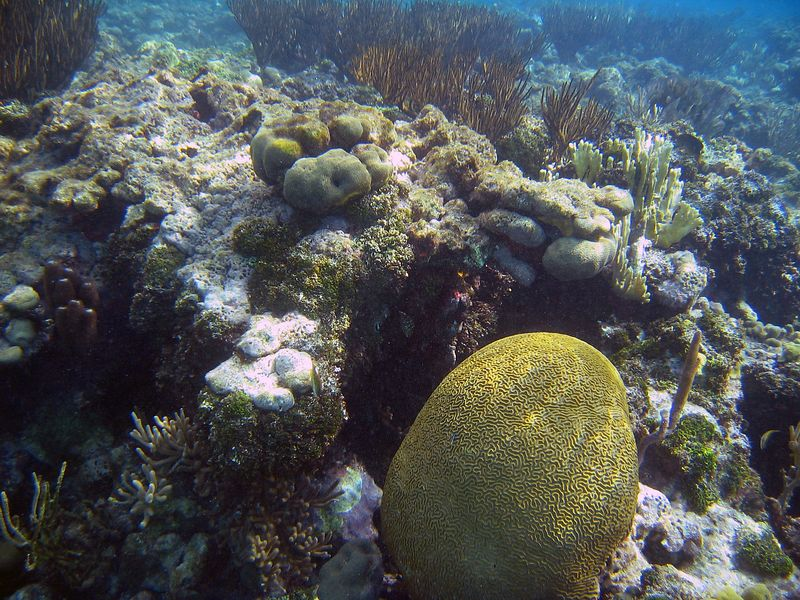 <b>Coral formations of Tobago Cays</b>   (Jul 21, 2004, 03:40pm)
